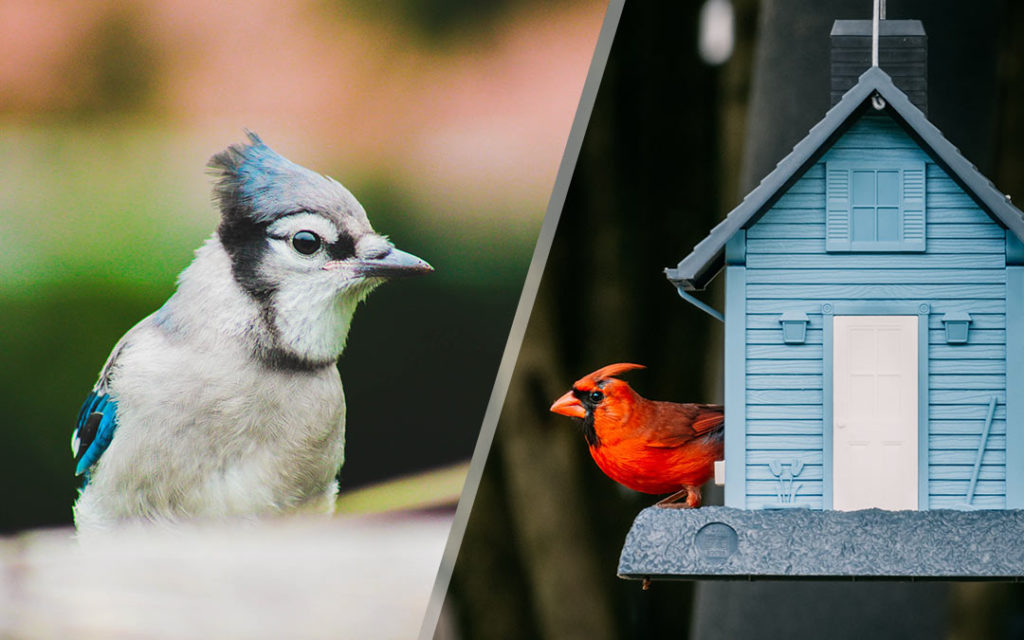 Birdwatching in the southeast featuring beautiful birds